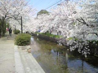 玉串川2011.jpg